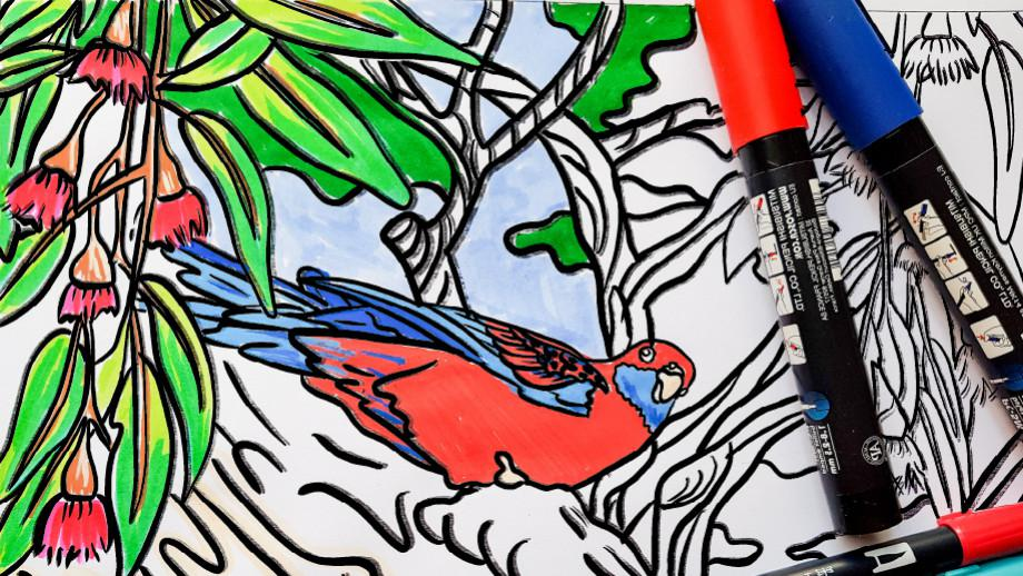 Crimson Rosella - colouring in sheet, partially coloured in